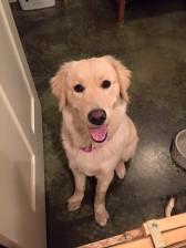 Aurora's Dog