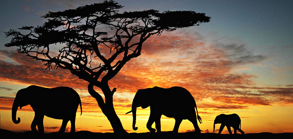 1-kenya-adventurer-safari-elephant-sunet-590