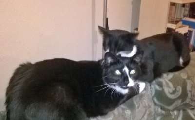 Linda's Cats