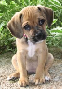 Anne's Puppy
