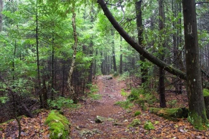 Bruce Trail 1